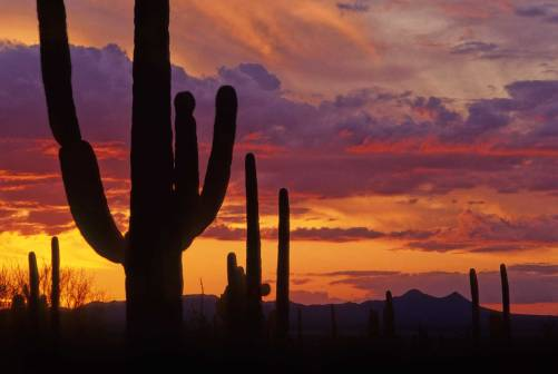 Saguaro-sunset-1