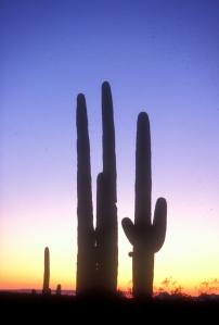 saguaro 3 credit photo NPS