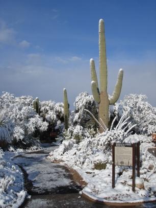 saguaro 5 credit photo NPS