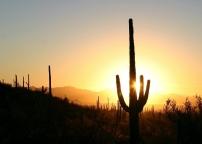saguaro 6 credit photo NPS