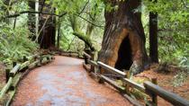 viator- sequoias